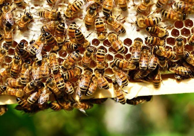 L'usage des abeilles